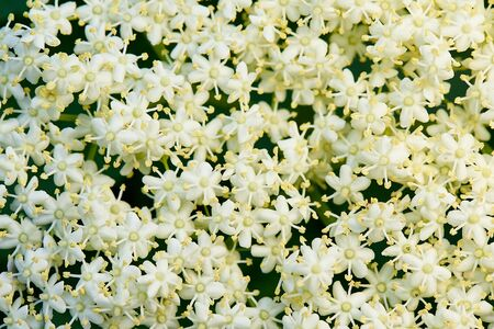 Background of white small flowers. Stock fotó