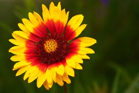 Macro photo of a flower with colorful petals.