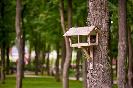 Bird feeder on a tree in the park. Stockfoto