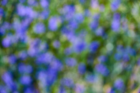 Blurred background. Defocused background of flowers in green grass.