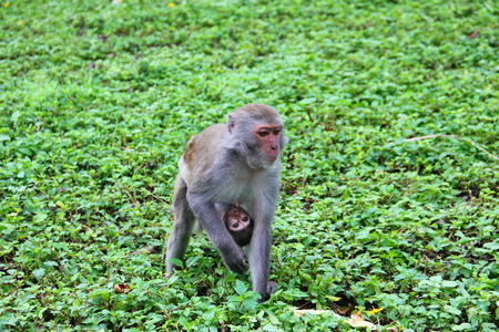 carries: touching frame, monkey mother and baby