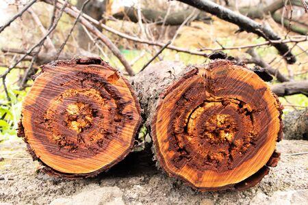 sawn wet log of shevogodereva wines