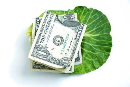 fresh green head of cabbage and one american dollar in it on a white background