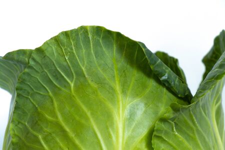 green cabbage on an isolated background close-up