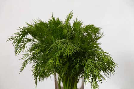 fresh bunch of dill on the table