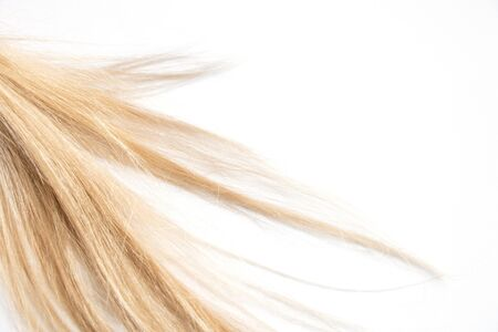 blond long hair on an isolated background close-up