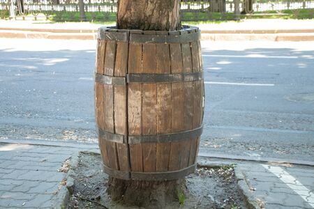wine barrel around a tree in the city center
