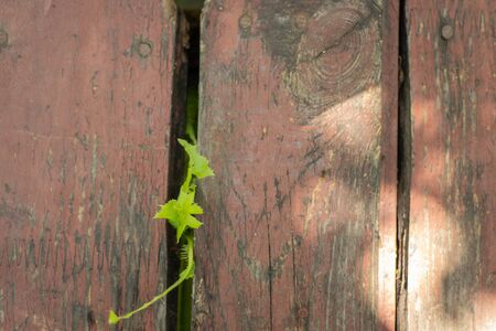 dirty wooden board as a closeup background Foto de archivo - 150125876