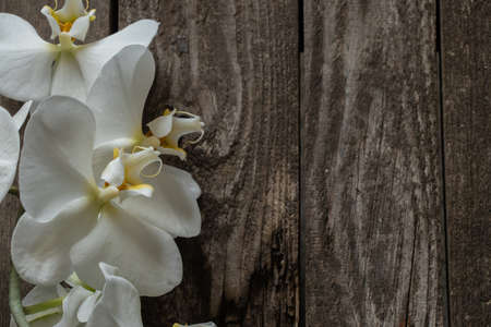 white orchid on an old wooden table close up