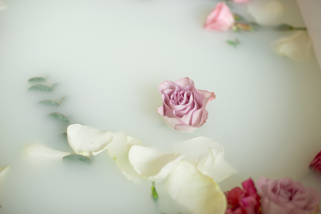 Turbid soapy water in bath with pink and white roses and petals viewed from above in full frame