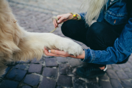 Dog is giving paw to the woman. Dog's paw in human's hand. Friendship with pet. Dog is a best friend. Close up.