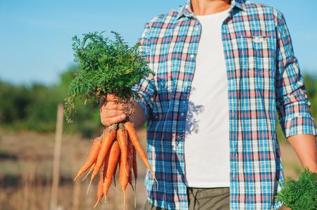 El hombre joven del granjero que se queda y que sostiene el manojo cosechó la zanahoria fresca en jardín. Verduras Bio Orgánicas Naturales. Los conceptos de Country Village Agriculture Healthy Food