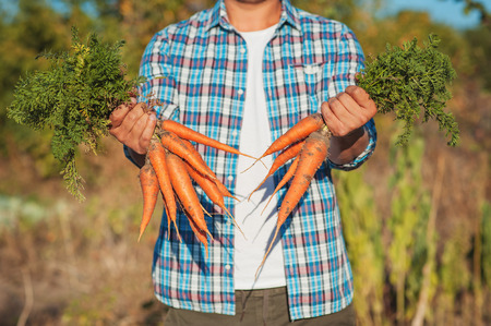 Young Farmer Man staying and Holding bunch harvested Fresh Carrot in Garden. Natural Organic Bio Vegetables. Country Village Agriculture Healthy Food concepts Stock Photo