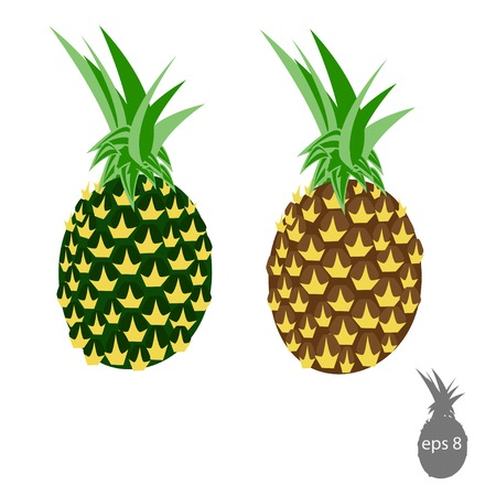 ananas: Illustration of pineapple, ananas, fruit