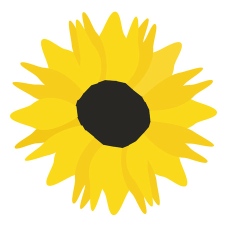 pedicle: Sunflower vector isolated, yellow flower, blossoming, spring flower