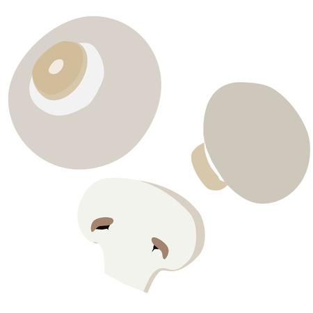 champignon: Organic food mushroom champignon vector icon isolated
