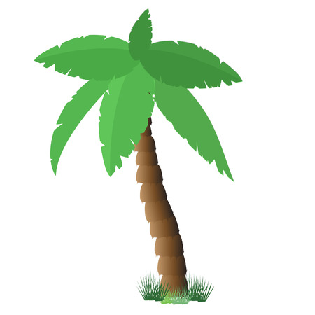 subtropical: Palm tree isolated on white, coconut tree, palm tree vector, tourism