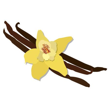 Vanilla flower, vanilla bean, vanilla pod, vanilla orchid