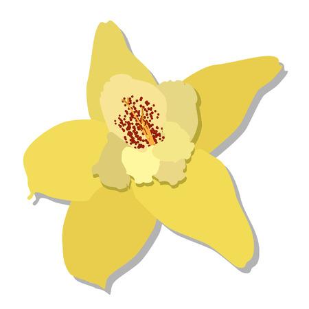 vainilla flor: Flor de vainilla, aislado flor de vainilla, vector de la flor de la vainilla