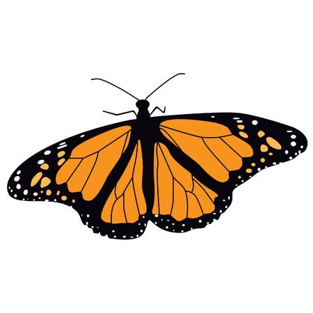 butterfly flying: Monarch butterfly flying vector illustration. Butterfly isolated. Tropical butterfly