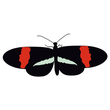 butterfly isolated: Black and red butterfly flying vector illustration.Butterfly isolated. Tropical butterfly