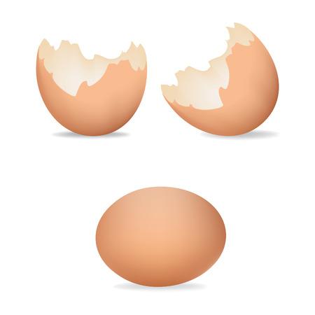 卵の殻のベクター イラストです。ひびの入った卵。茶色の現実的な卵シェル アイコンは、白い背景で隔離。