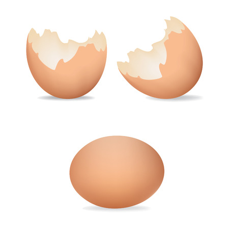 Vector illustration of eggs shells. Cracked eggs. Brown realistic egg shell icon, isolated on white background.