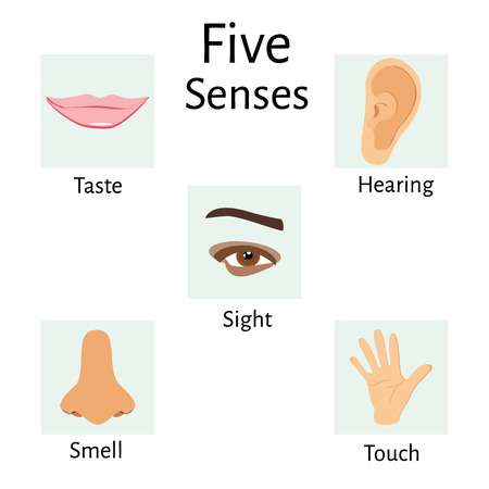 senses: Vector illustration of five senses icons. Human eye, nose and ear, smell and taste and touch. Five senses icon set, collection