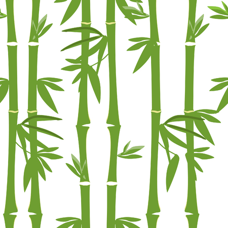 green bamboo: Green bamboo  pattern raster,bamboo tree , leaves, branches