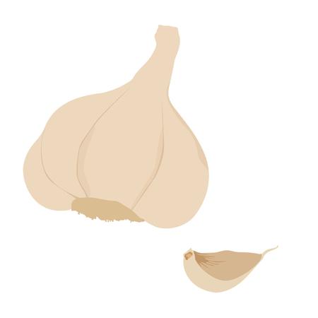 garlic clove: Spice garlic raster isolated, organic ingredient, garlic clove