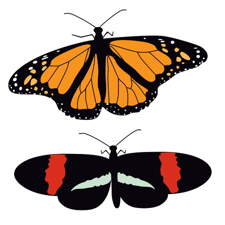 butterfly isolated: Two butterflies flying raster illustration. Butterfly isolated. Tropical butterfly