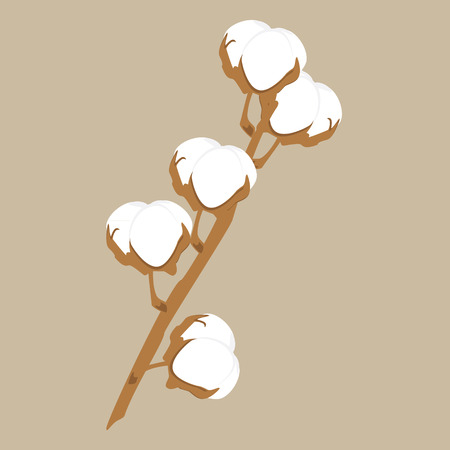 Vector illustration cotton brunch on brown background. Cotton plant icon. Natural cotton