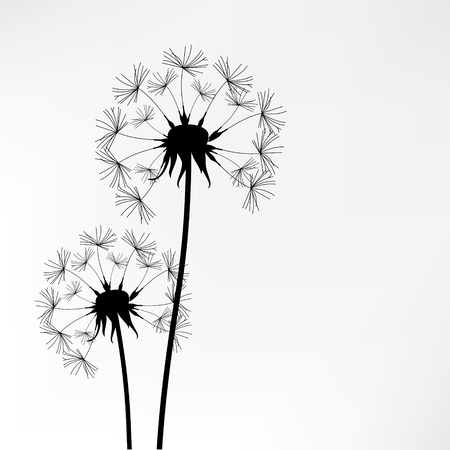 overblown: Vector illustration dandelion time. Two dandelions blowing in the wind. The wind inflates a dandelion