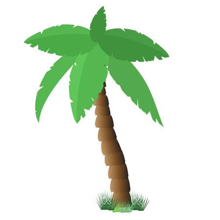 palmtree: Palm tree isolated on white, coconut tree, palm tree raster, tourism Stock Photo