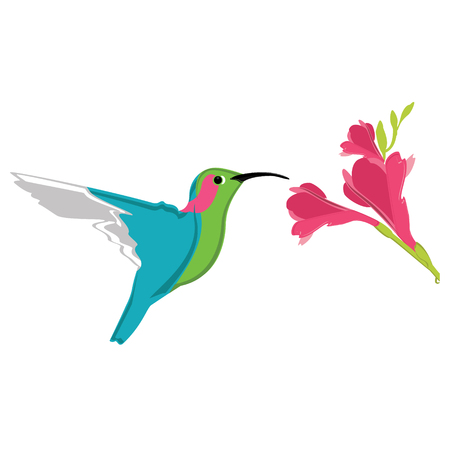 Vector illustration small exotic hummingbird and beautiful exotic pink flower. Nature paradise
