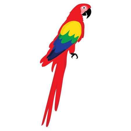 ave del paraiso: ilustración vectorial colorido loro guacamayo. Hermosa guacamaya. Loro rojo de dibujos animados