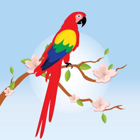 guacamaya caricatura: ilustraci�n vectorial colorido guacamayo loro sentado en flor rama del �rbol. Hermosa guacamaya. Loro rojo de dibujos animados Vectores