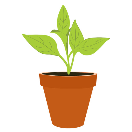Vector illustration flower, plant growing in a pot. Potted plant icon. Little plant seedling. Seedling icon