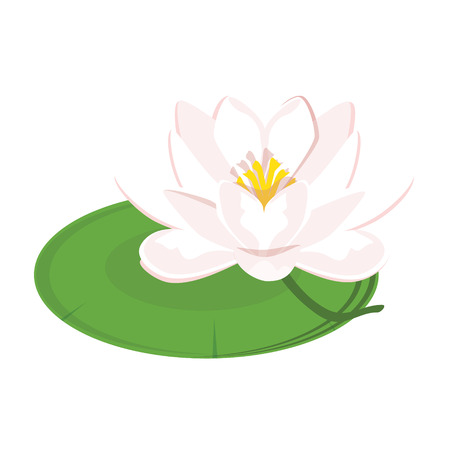 Vector illustration beautiful pink water lily or lotus flower on green leaf isolated on white background.