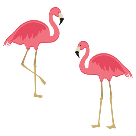 Vector illustration pink flamingo. Exotic bird. Cool flamingo decorative flat design element.  イラスト・ベクター素材