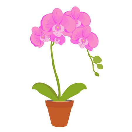 Vector illustratie exotische roze orchidee bloem in een pot. Phalaenopsis orchidee bloeien in een pot