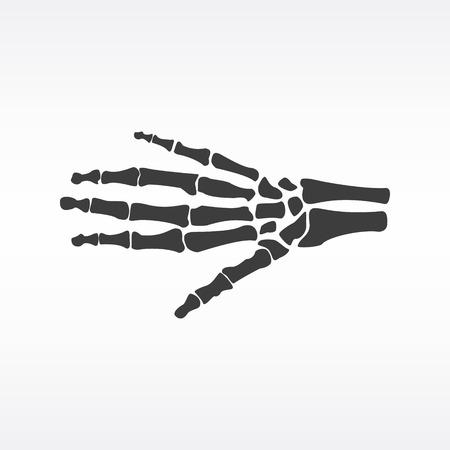 distal: Vector ilustración de los huesos de la mano. icono esqueleto humano mano ortopédica. centro de diagnóstico