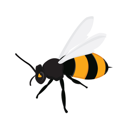 bee cartoon: Raster illustration honey bee. Flying queen bee isolated on white background. Bee icon