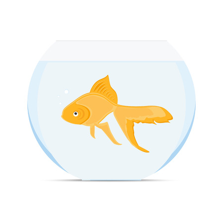 gold fish bowl: Raster illustration realistic goldfish in bowl. Gold fish swimming in transparent round glass bowl aquarium