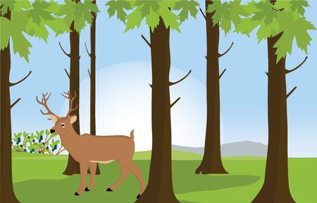antler: Raster illustration green sunny forest landscape with deer great antler. Forest background. Forest animals
