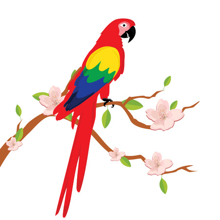 macaw parrot: Raster illustration colorful macaw parrot sitting on blooming tree branch. Beautiful macaw. Cartoon red parrot