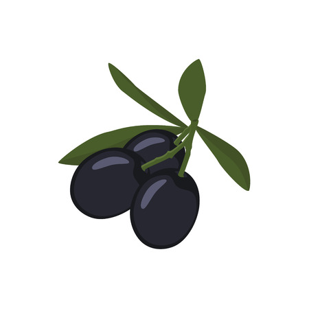 picking fruit: Raster illustration branch of black olives with leaves or cooking, gastronomy, oil and vegetarian design.