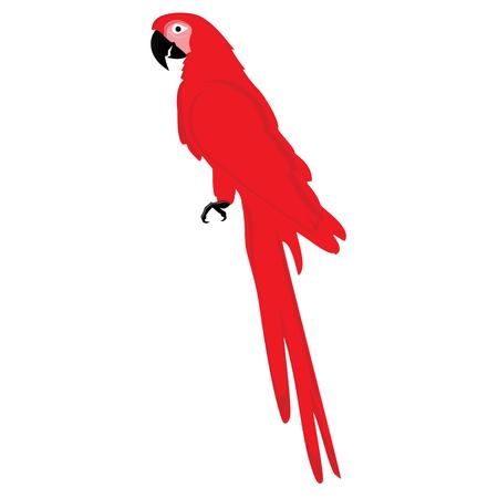 Raster illustration red, large parrot. Exotic bird. Tropical bird