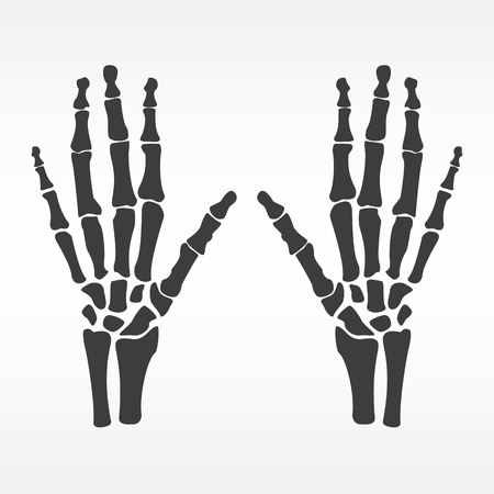Raster illustration hands bones. Orthopedic human hand skeleton icon. Diagnostic center. Pair of human hands