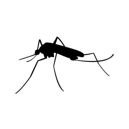 nile: Raster illustration insect. Malaria or mosquito. Mosquito black silhouette.